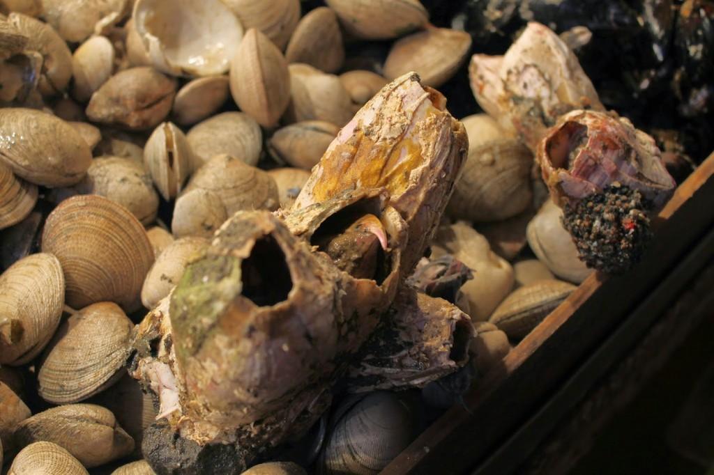 Chile seafood
