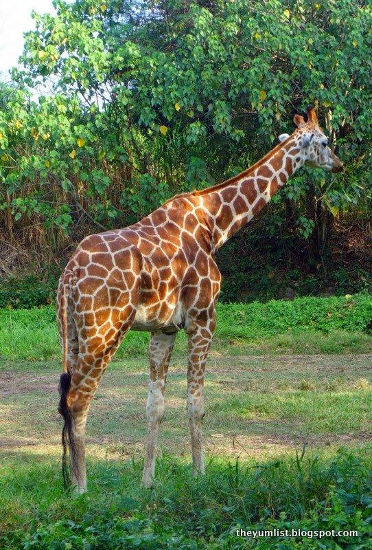 mara river safari lodge, bali safari