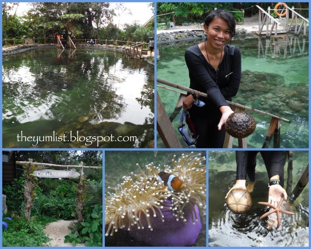 Coral Nursery Activities at the Andaman Langkawi
