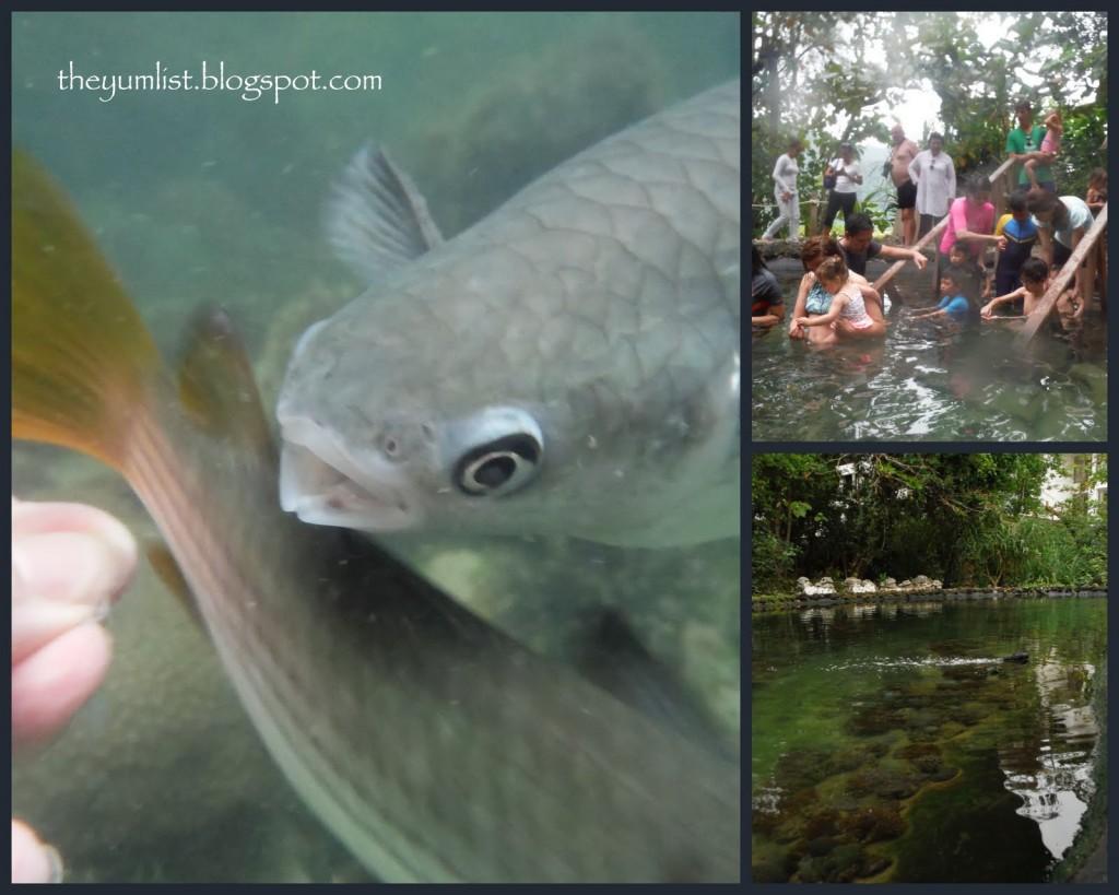 Fish feeding at the Andaman Langkawi's Coral Nursery