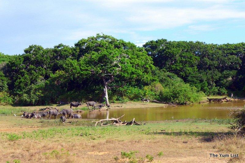 chena huts, uga escapes