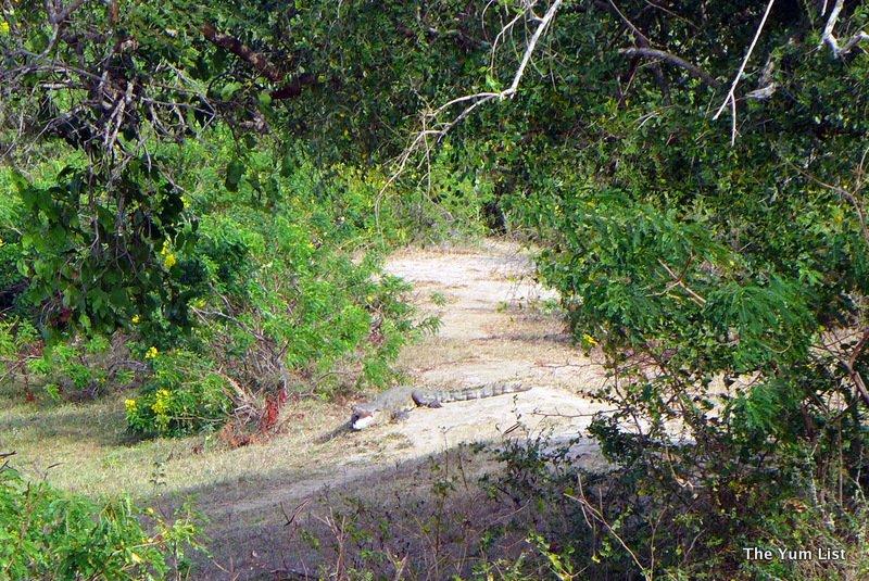 yala national park, best safaris