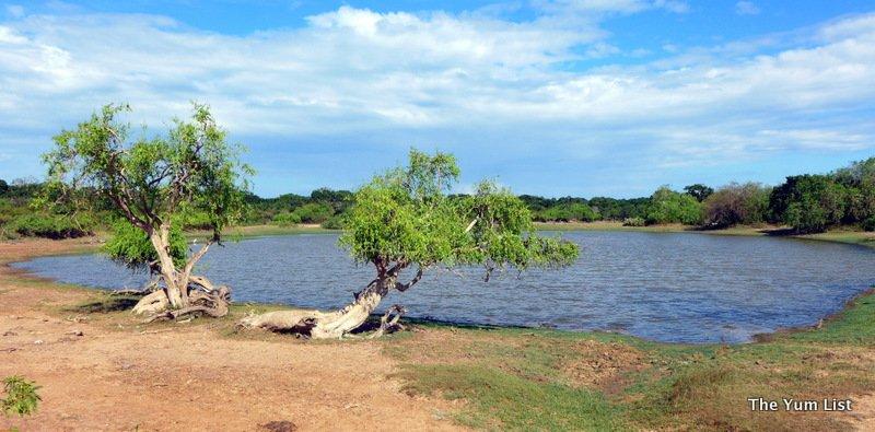 safari with Chena Huts by Uga Escapes