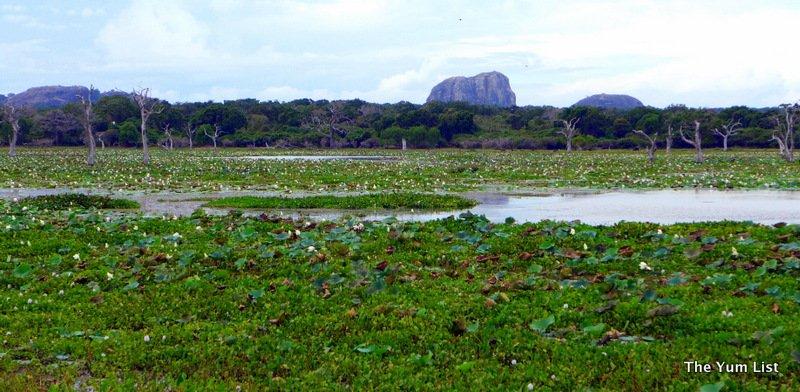 Chena Huts by Uga Escapes, Yala National Park, Sri Lanka