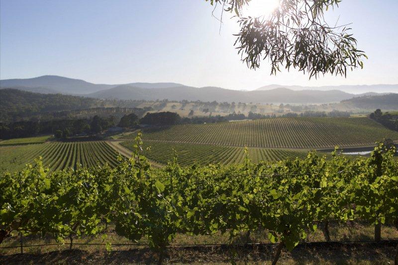 Yarra Valley Wines