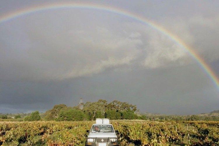 Smallfry Natural Wines