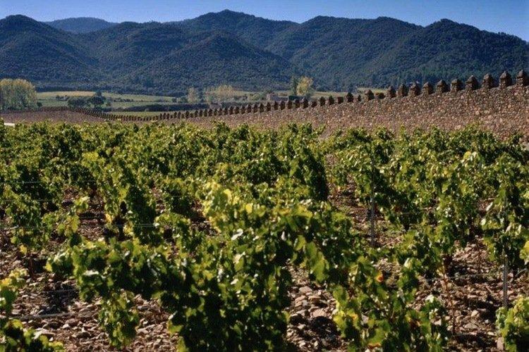 Torres Wine, La Bodega KL