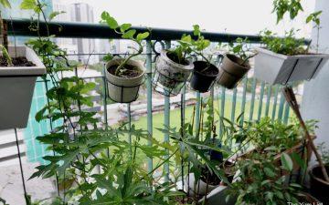 grow your organic food plants KL