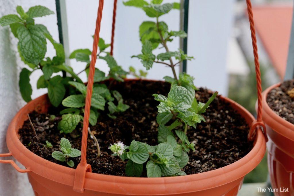 Edible Balcony Gardening Malaysia.