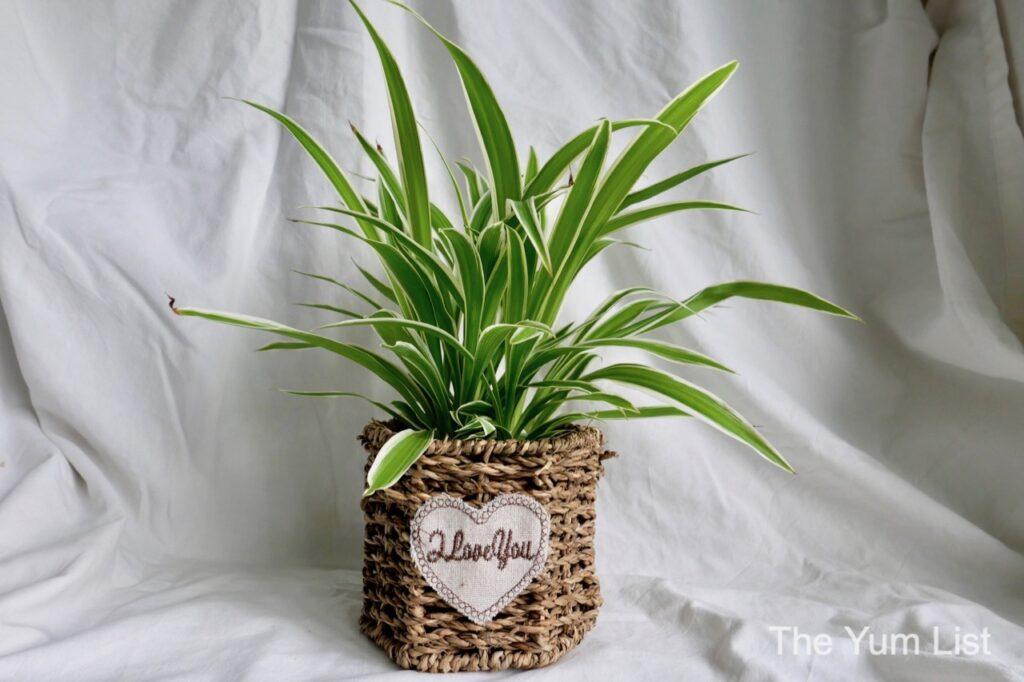 Online Plant Shops Kuala Lumpur