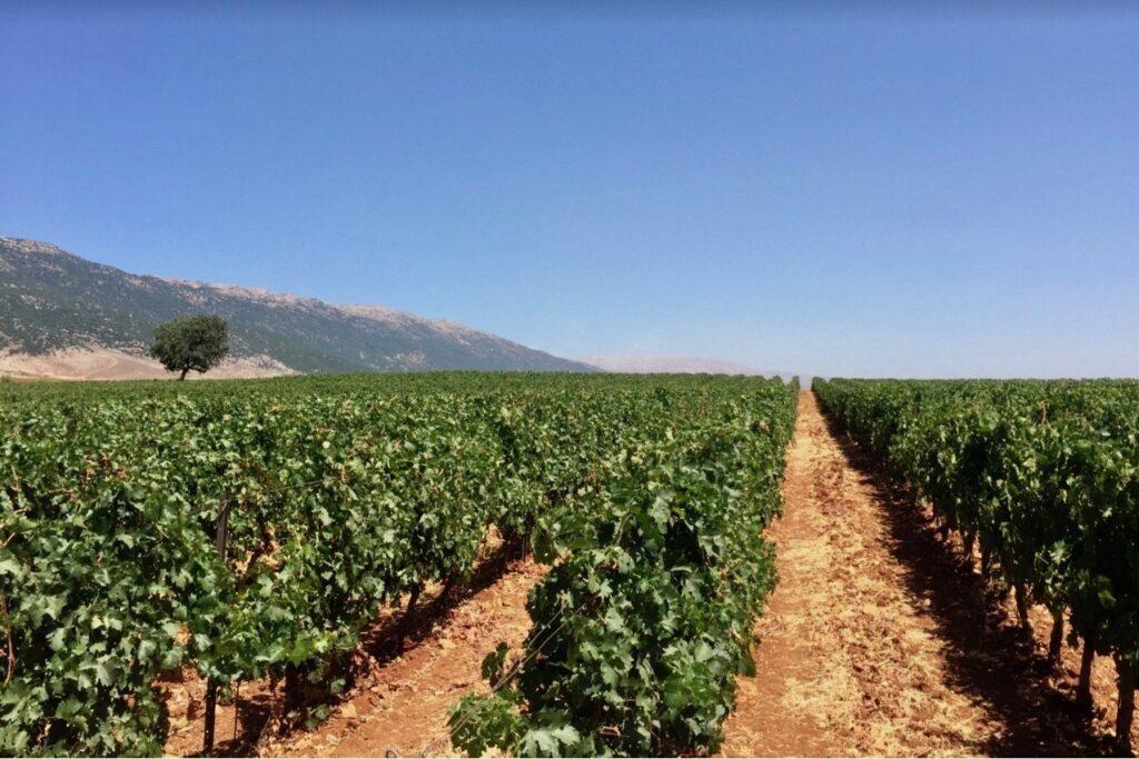 Chateau Marsyas Wine