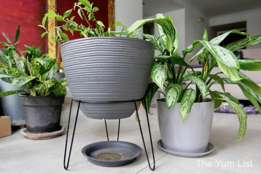 Plants for Condo Apartment Kuala Lumpur