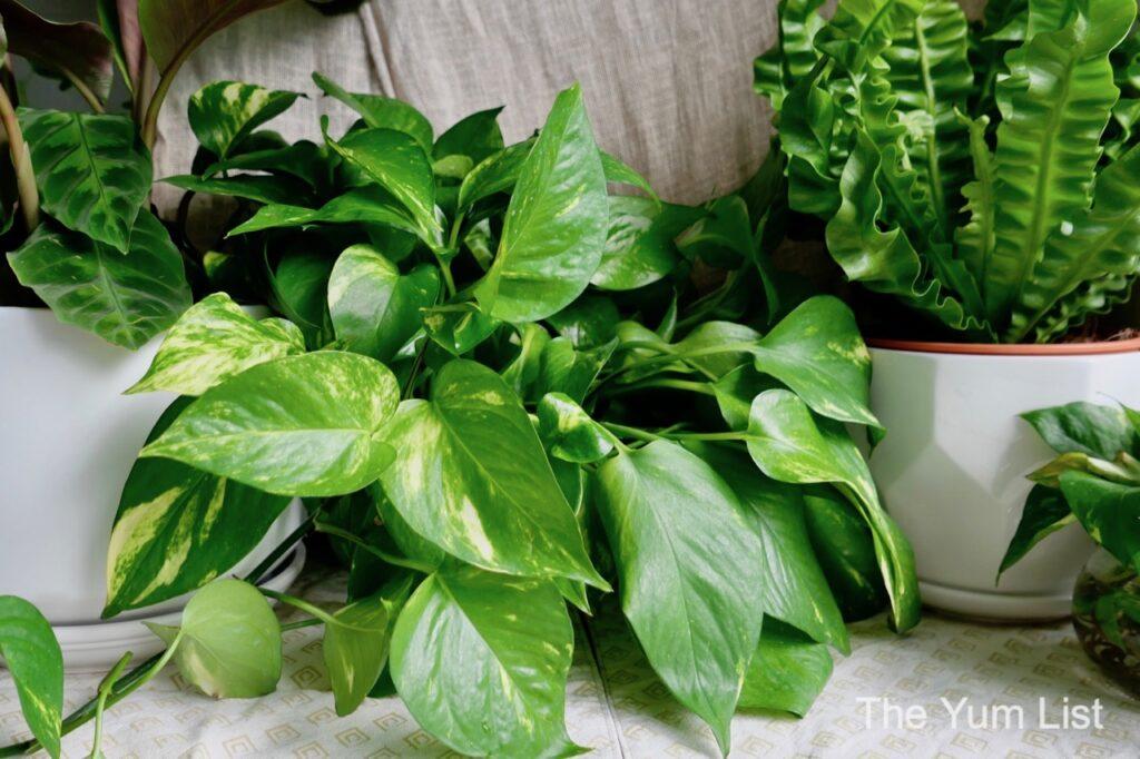 Online Plant Shops KL Same Day Delivery